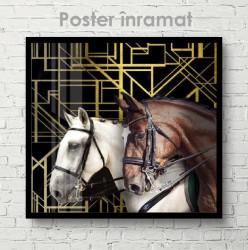 Poster, RinocerPoster, Doi cai