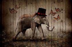 Tablou modular, Elefant elegant și fluturi
