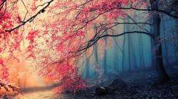 Tablou modular, Pădurea de toamnă în pădurea adâncă