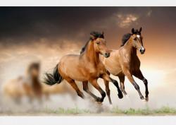 Fototapet Animale, Cai ce galobează în depărtare