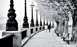 Fototapet, O plimbare prin parc iarna