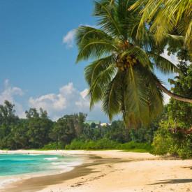 Fototapet, Palmieri și marea