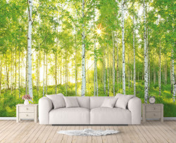 Fototapete 3D, Pădure de mesteacăn