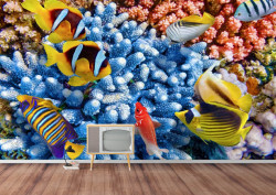 Fototapete cu lumea subaсvatică în culori vii