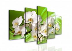 Multicanvas, Orhideea albă pe fundalul verde.