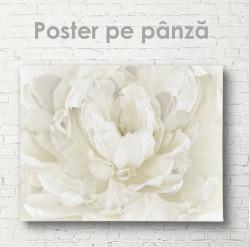 Poster, Floare albă