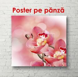 Poster, Floare de orhidee roz