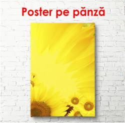 Poster, Floarea soarelui
