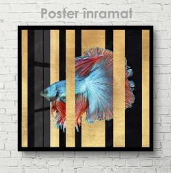 Poster, Pește albastru cu aripioare roșii
