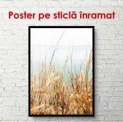 Poster, Un câmp de porumb lângă mare