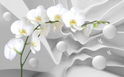 Fototapet 3D, O orhidee albă pe un fundal alb 3D