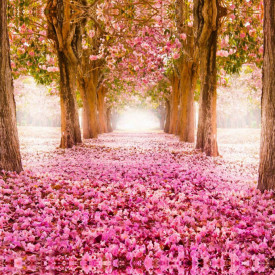 Fototapet, Aleea cu flori roz