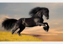 Fototapet, Nn cal negru ce galopează pe plajă