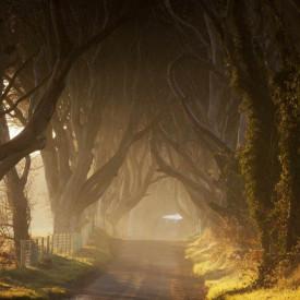 Fototapet,Pădurea întunecată