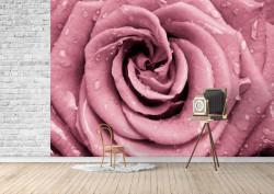 Fototapet, Un trandafir roz și picături de apă