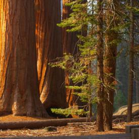 Fototapete Pădurea minunilor