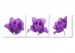 Multicanvas, Trei flori de liliac.