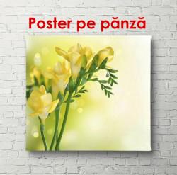 Poster, Flori galbene pe un fundal delicat