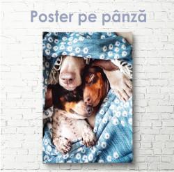 Poster, Idilă drăguță de câini