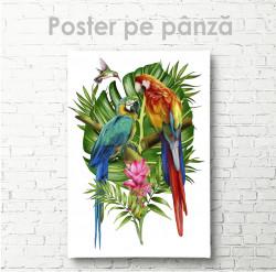 Poster, Papagali grațioși