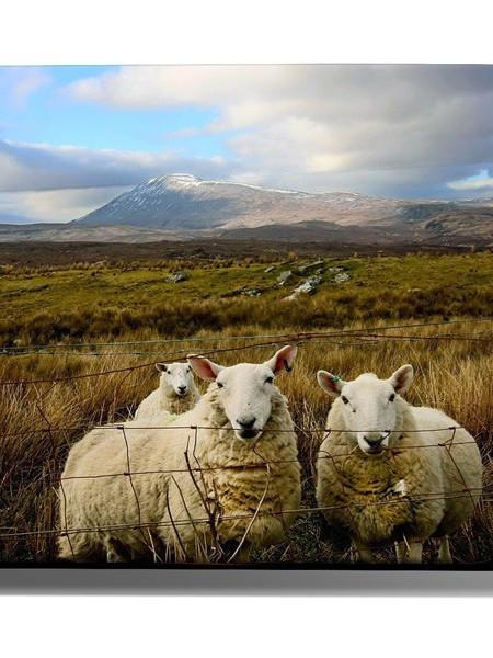 Poze TABLOU PASTURE SHEEP