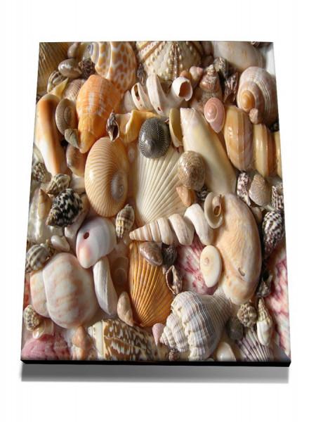 TABLOU SHELLS BEACH