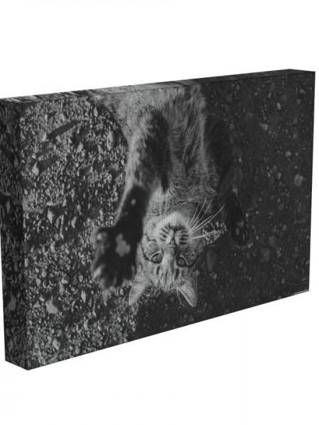 Poze TABLOU BLACK & WHITE CAT