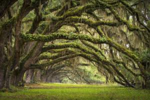 Tapet din hartie cu fibre de nailon Fairy Forest Rebel Walls