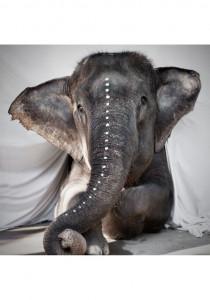 Poster 100x100 cm tyvek Elephant Adele Love Warriors