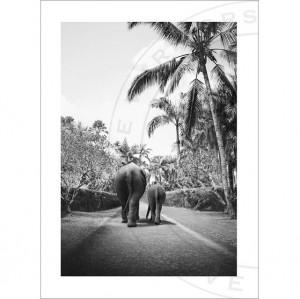 Poster 70x100 cm tyvek Elephant Walk Love Warriors