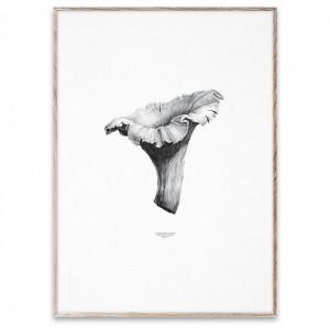Tablou cu rama din lemn de stejar 50x70 cm Chanterelle White Paper Collective