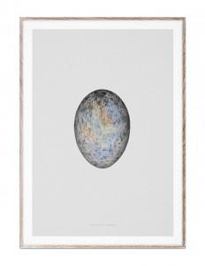 Tablou cu rama din lemn de stejar 50x70 cm Translucent Egg Paper Collective