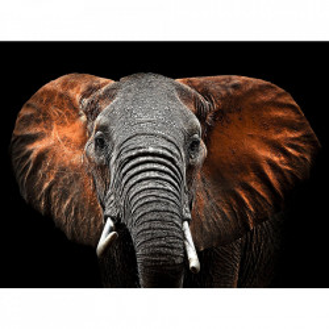 Tablou multicolor din sticla 80x120 cm Elephant Ter Halle