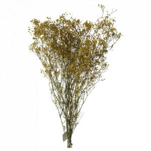 Plante ornamentale uscate galben miere 70 cm Gypsophila Opjet Paris