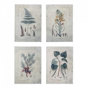 Set 4 postere din hartie Plants Bloomingville
