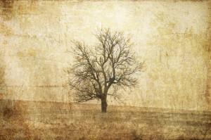 Tapet din hartie cu fibre de nailon The Lonely Tree Rebel Walls