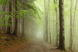 Tapet din hartie cu fibre de nailon Forest Path Rebel Walls