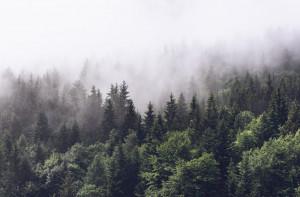 Tapet din hartie cu fibre de nailon Misty Fir Forest Rebel Walls