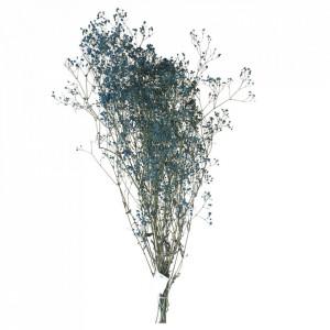 Plante ornamentale uscate albastre 70 cm Gypsophila Opjet Paris