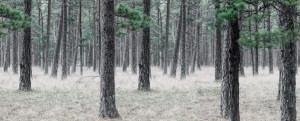 Tapet din hartie cu fibre de nailon Pine Forest Rebel Walls