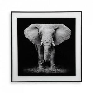 Tablou alb/negru din sticla 50x50 cm Elephant Versa Home