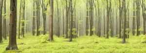 Tapet din hartie cu fibre de nailon Deciduous Forest Rebel Walls
