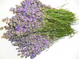 Servicii distilare flori de Lavanda si alte plante eterice