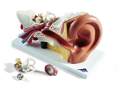 Model Ljudsko Uho