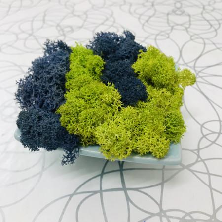 Farfurie din portelan decorata cu licheni