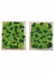 Set cu 2 tablouri verzi din licheni