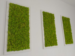 Set 3 tabouri cu licheni