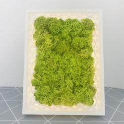 Rama luminoasa cu licheni