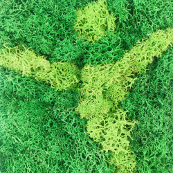 Tablou Hercule decorat cu licheni