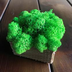 Cutie cu licheni